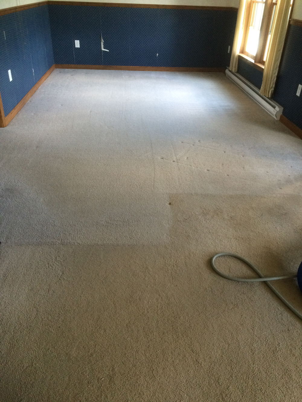 Carpet Cleaning by Ashford Carpet Clean