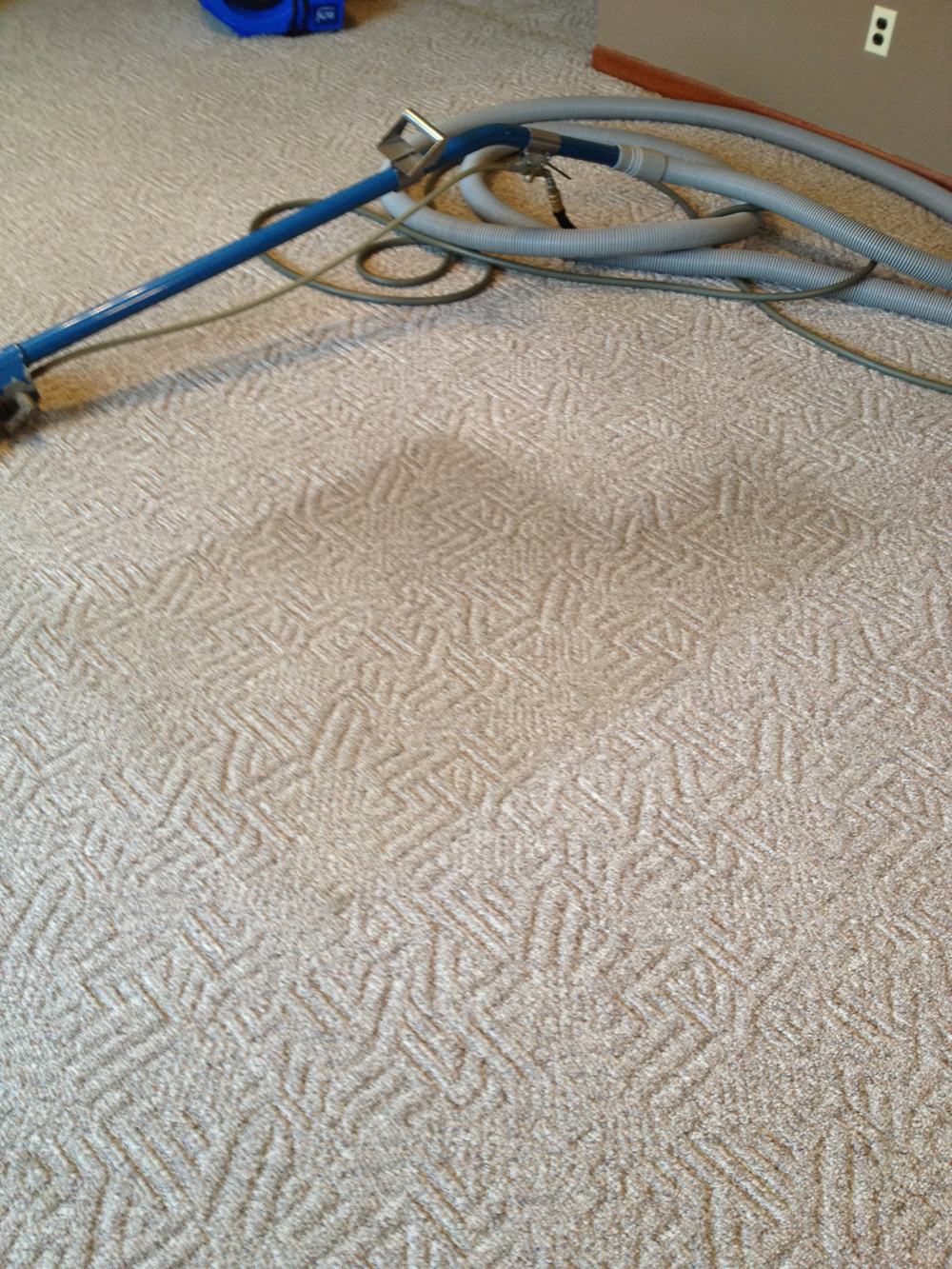 Carpet Cleaning by Ashford Carpet Clean